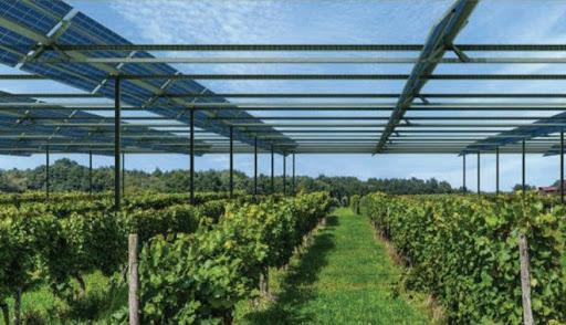 Điện mặt trời kết hợp nông nghiệp