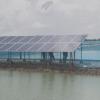 Điện mặt trời ao nuôi